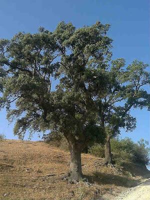 Bosques Comestibles del Mediterraneo