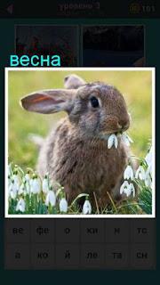 на поляне сидит кролик и ест цветы в игре 667 слов 3 уровень