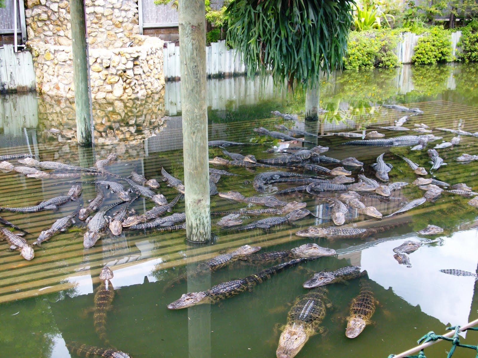 Zoozooreview Gatorland Zoo