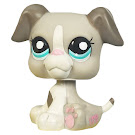 Littlest Pet Shop Gift Set Boxer (#2038) Pet