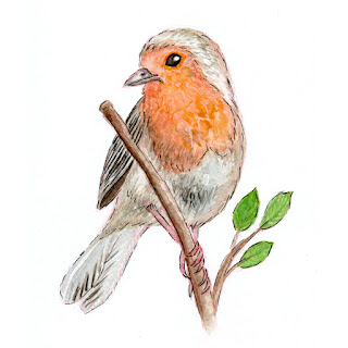 Robin bird watercolor painting