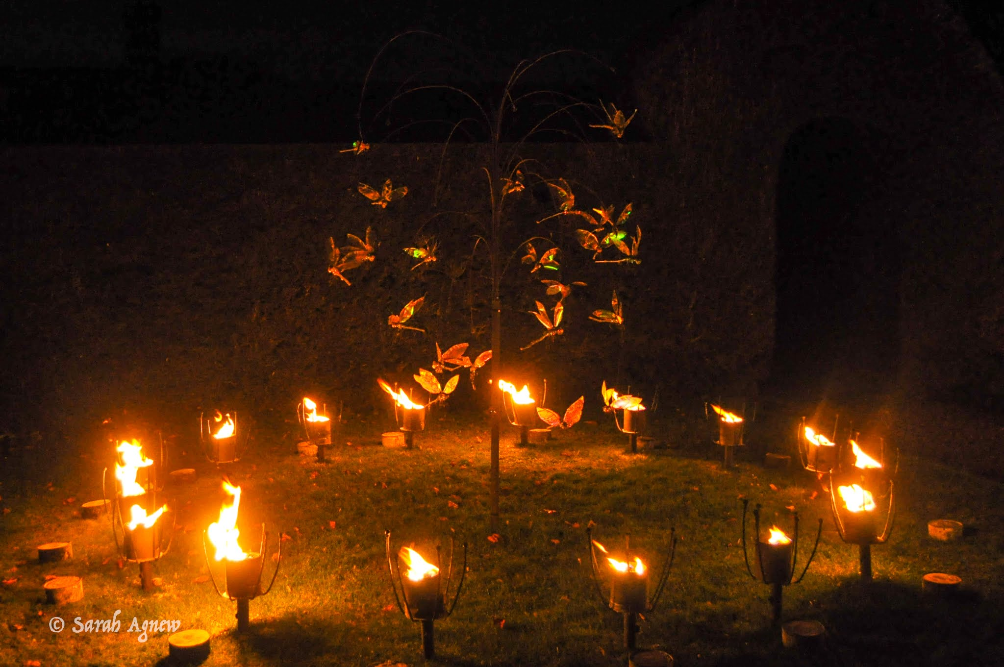 Glow Wild at Wakehurst 2019, photos by modernbricabrac