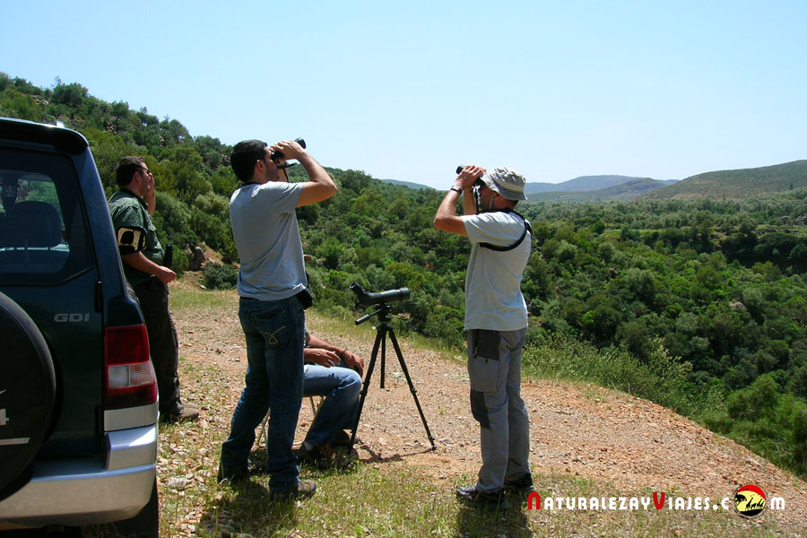 Birdwatching en Marruecos