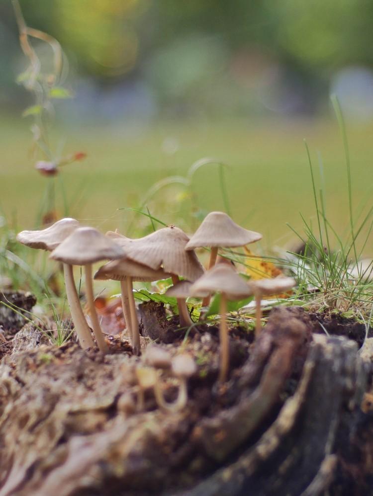 Pilze, herbst, herbstpflanzen,  Herbstspaziergang