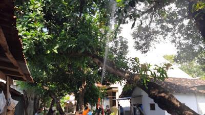 Rumah Warga Kelurahan Patokan Diserang Ribuan Ulat Bulu