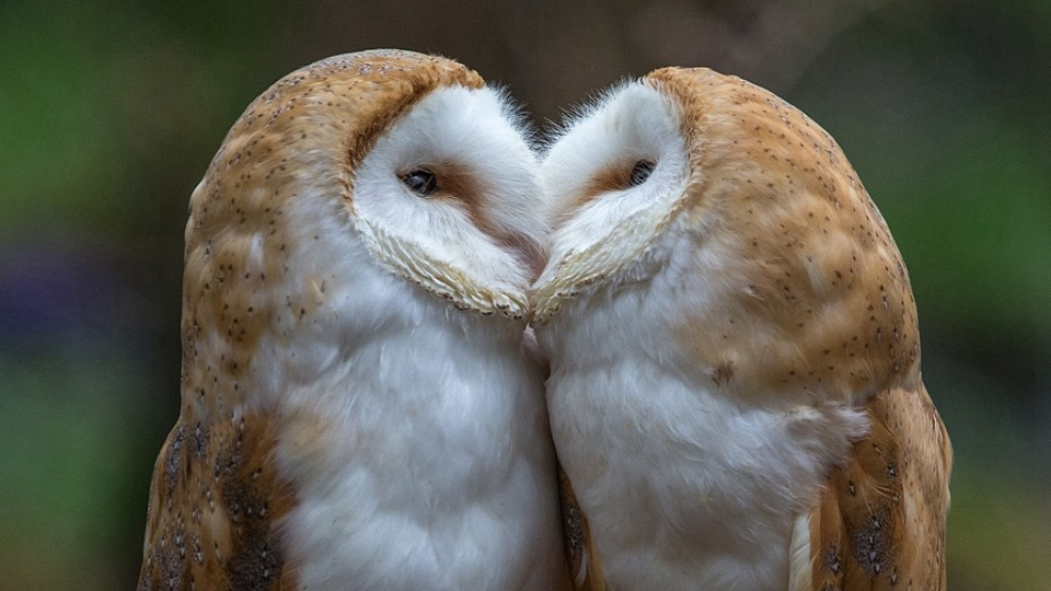 International Kissing Day: Amazing kissing moments from the wild