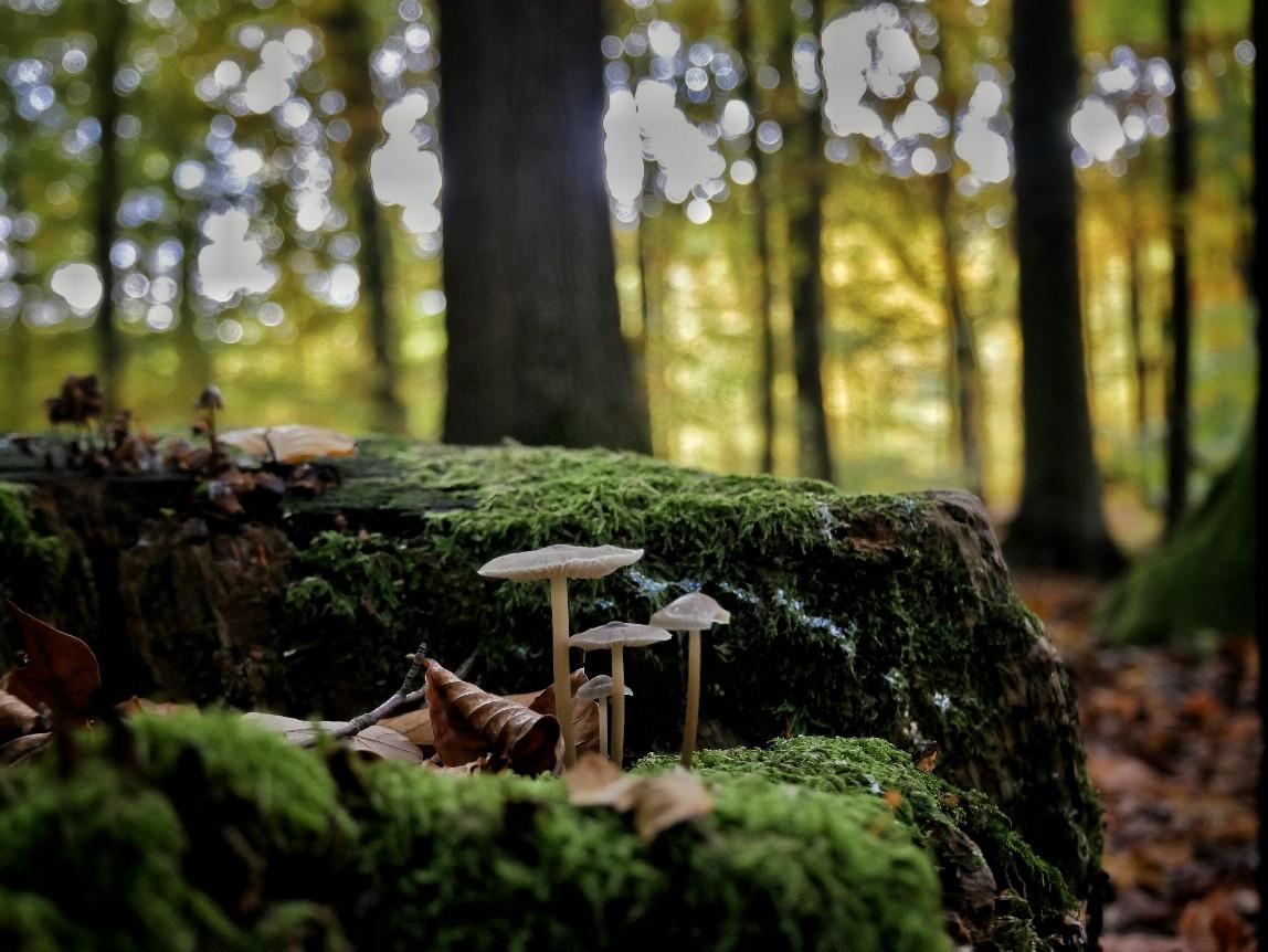 Waldwanderung, Sachsenwald
