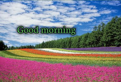 Good Morning Rose GIFs