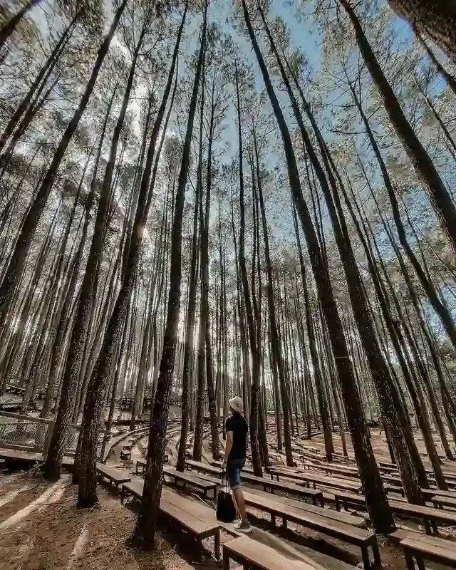 Hutan Pinus Mangunan Jogja - Foto instagram khairulzaky