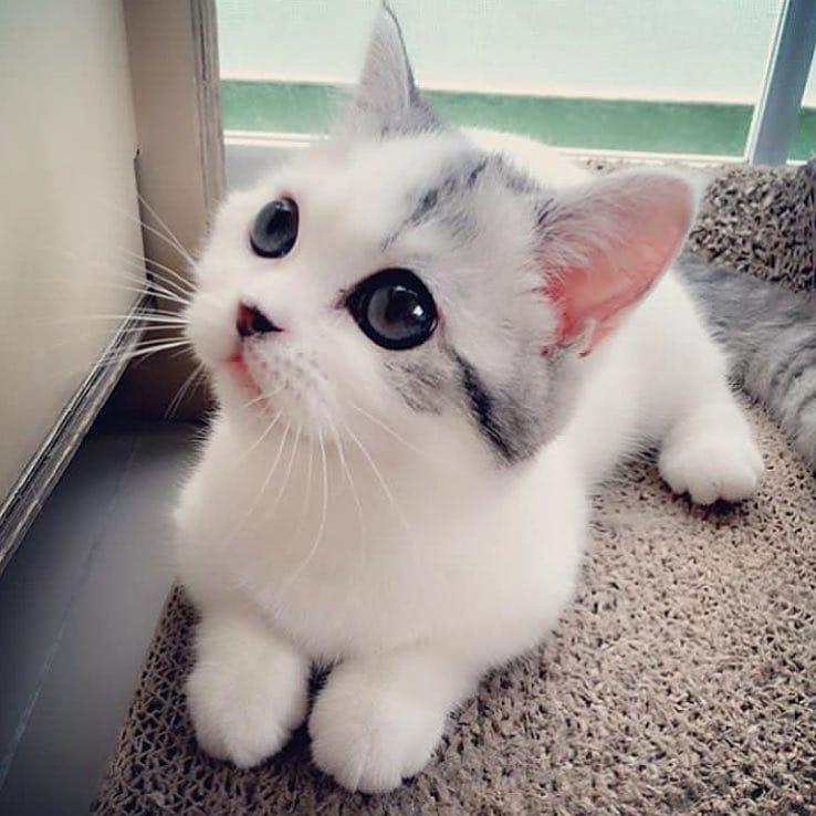 Gambar Kucing Yang Paling Comel Di Dunia Kucingcomel Com