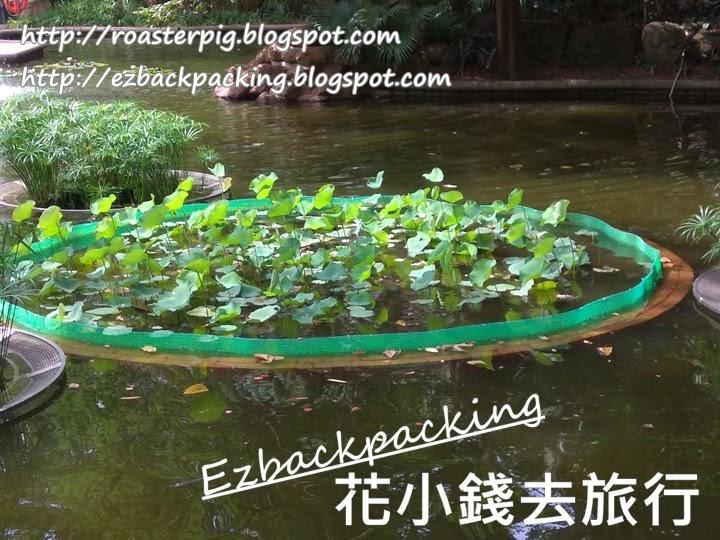 九龍公園荷花池