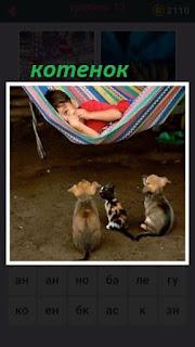 мальчик спит в гамаке а рядом два щенка и котенок между ними
