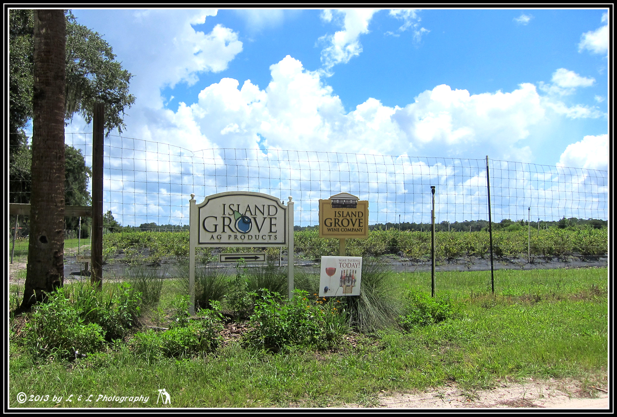 island grove Island grove wine company specializes in fine blueberry wines using the freshest blueberries from our own florida plantations the winery is located in north central florida, southeast of gainesville in alachua county.