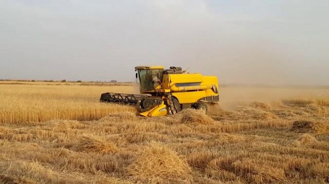 المهدية : بداية الاستعدادات لموسم الحصاد رغم تراجع صابة الحبوب