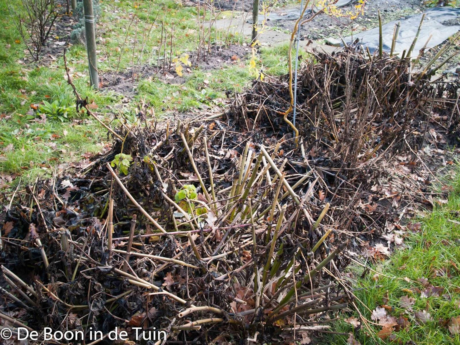 dahlia's winter najaar herfst vorst moestuin volkstuin