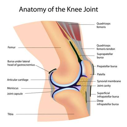 Physiotherapy in knee pain due to osteoarthritis health tips anatomy of the knee joint ccuart Choice Image