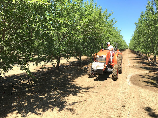 fertilizing almonds