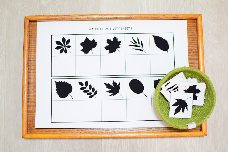 FREE Leaf Silhouettes Learning Materials