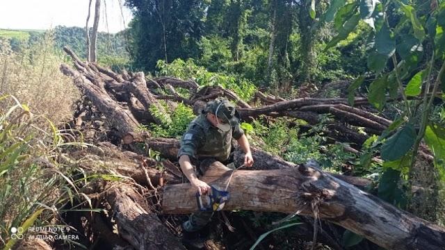 Produtor rural é multado em R$ 43 mil por desmatamento ilegal em Campina da Lagoa