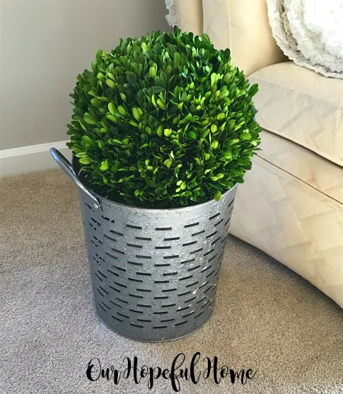 olive bucket planter boxwood