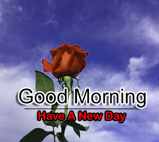 New Good Morning 4k Full HD Images Download For Daily%2B66