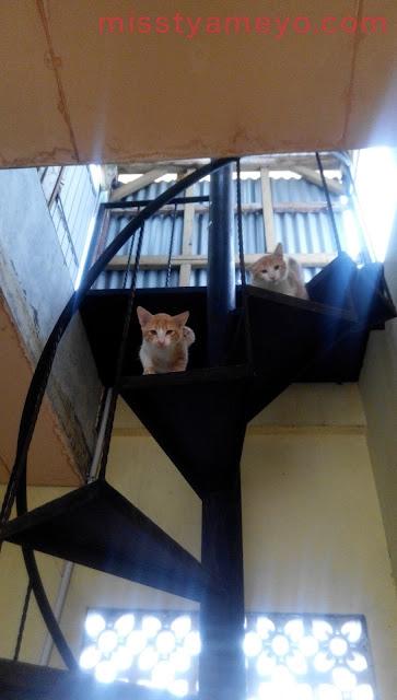 5 Anak Kucing yang Terbuang, Kehujanan dan Kedinginan yang Kami Coba Selamatkan.