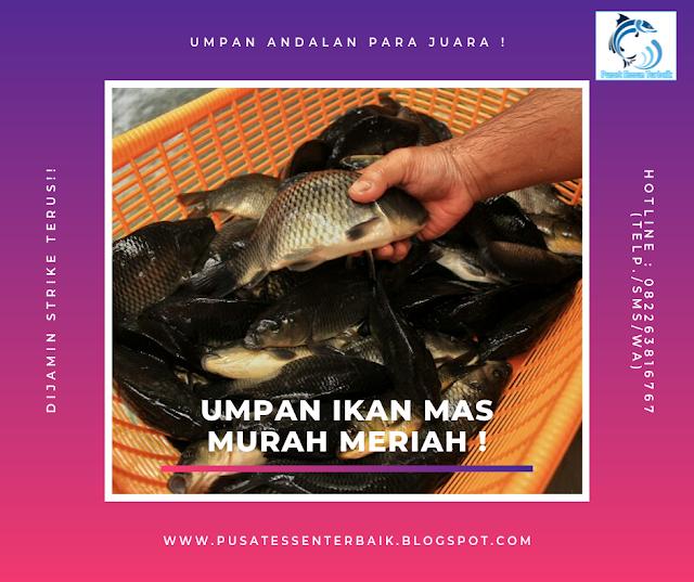 Racikan Jitu Umpan Ikan Mas Murah Meriah Mantap Kaskus