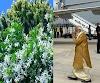 पीएम मोदी ने लगाया है जो परिजात का पौधा उसको धरती पर लेकर आए थे श्री कृष्ण, लक्ष्मी को है प्रिय