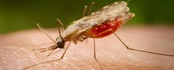 First malaria vaccine to be tested in Kenya, Ghana and Malawi in 2018