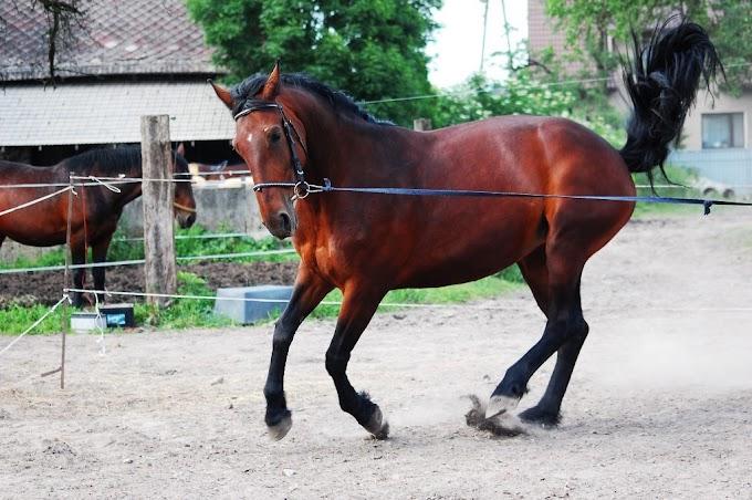 Beautiful Horse Wallpaper - 5