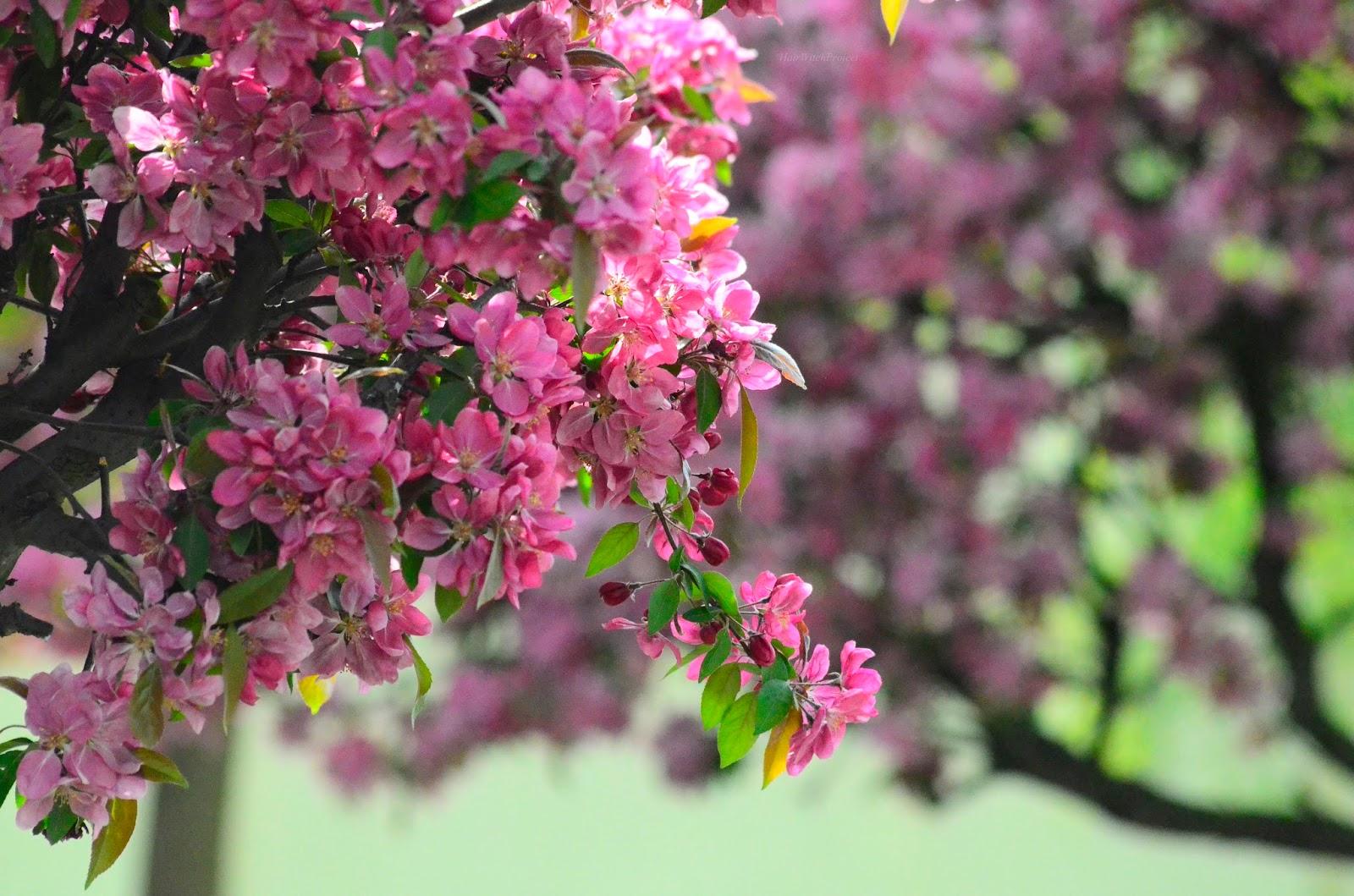 kwiaty | róż | drzewa | wiosna | park | opinia
