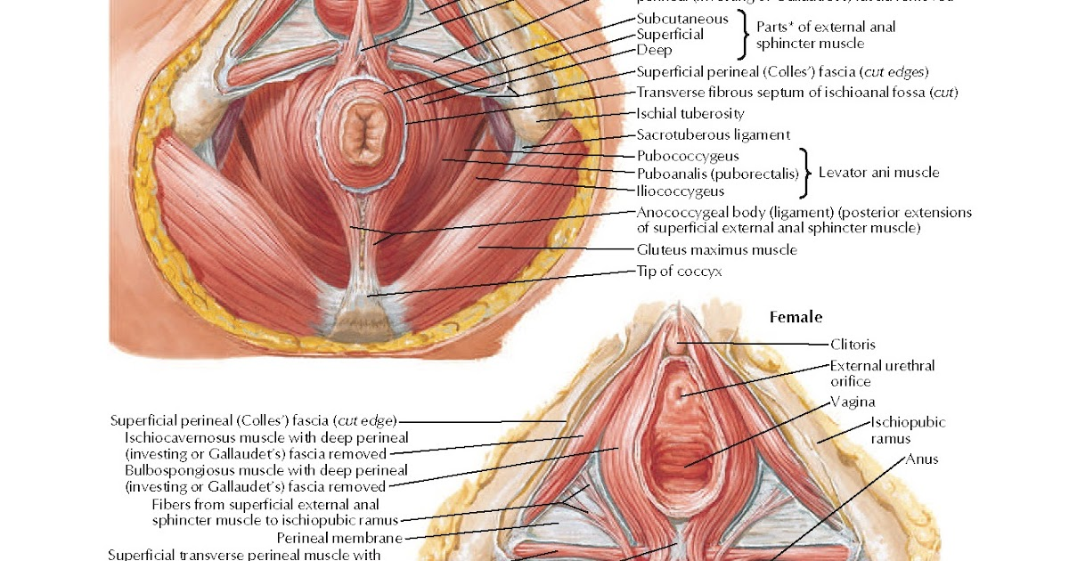 Anal stenosis