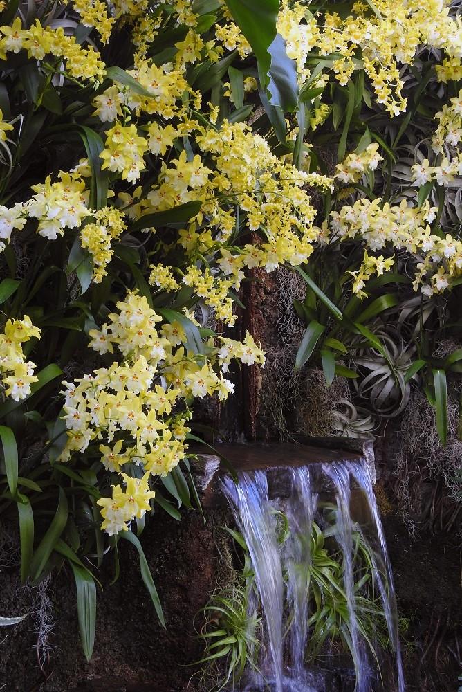 jardín tropical con cascada de agua, tillandsias y orquídeas