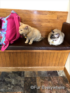 Carmine and Tylan sit together on a bench in an exam room at the vet.