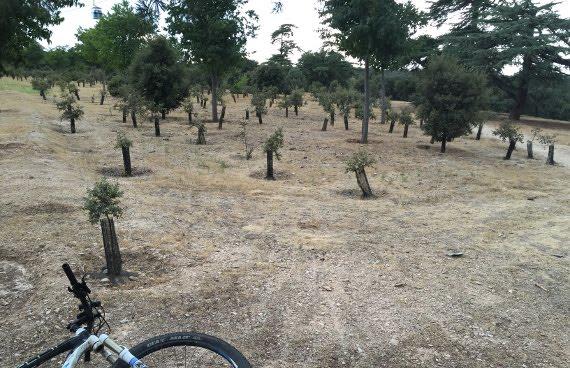 Plantación de encimas en casa de campo
