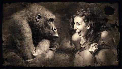 Monyet Mengatakan, Monyet Melakukan