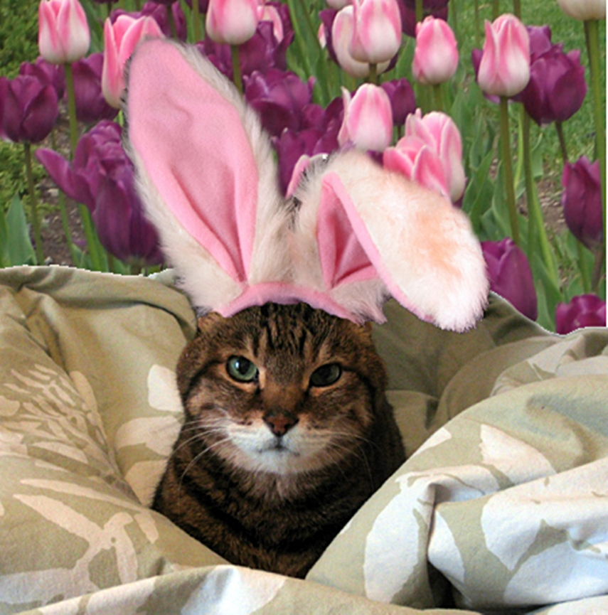 easter backgrounds cat images - photo #7