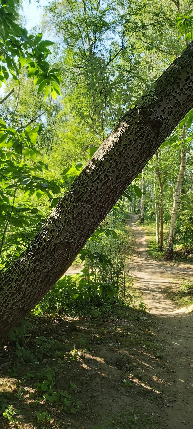 In het park: mossen en grassen en bomen en zonnestralen op de bremweide