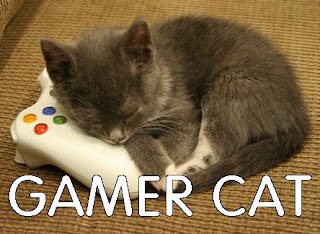 Funny kitty nap gamer cat meme