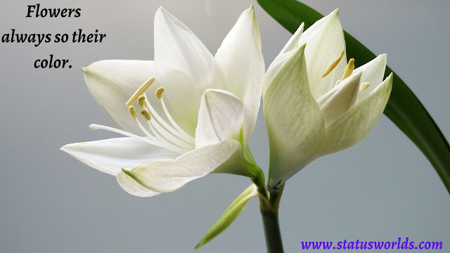 Flower Status, Quotes, and Captions