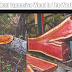 दुनिया की सबसे विचित्र लकड़ी– Most Expensive Wood In The World