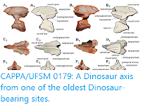 https://sciencythoughts.blogspot.com/2017/08/cappaufsm-0179-dinosaur-axis-from-one.html