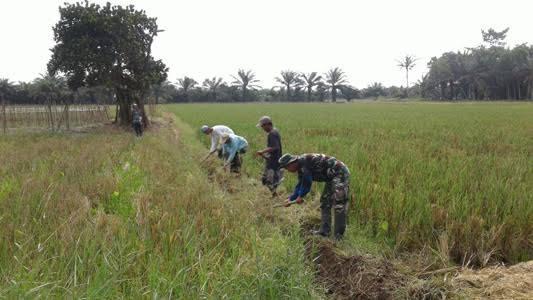 Personil Babinsa ini Bersihkan Saluran Irigasi Bersama Masyarakat Desa Tanjung Muda