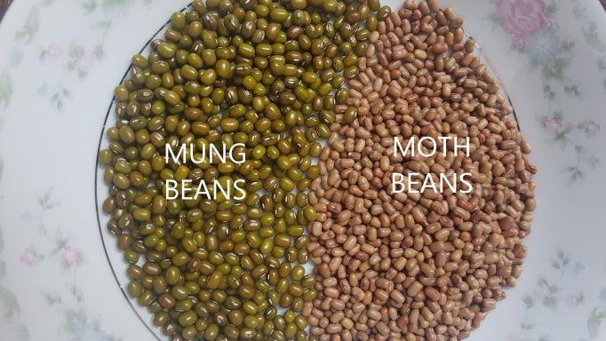 moat beans