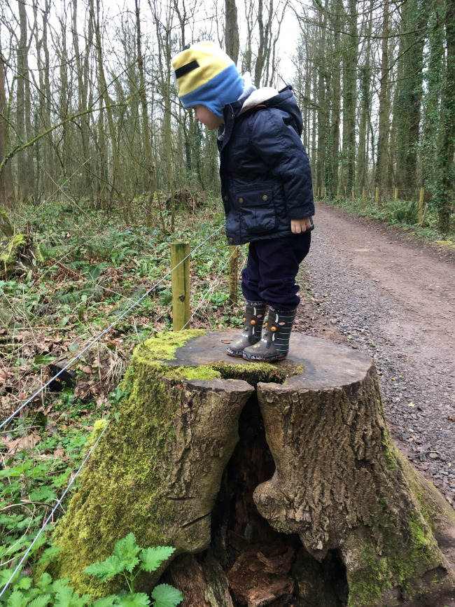 Our-Weekly-Journal-20-March-toddler-standing-on-a-tree-trunk