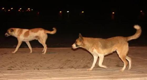 مطالب بالتدخل ضد كلاب ضالة حوّلت ليالي سكان إلى جحيم
