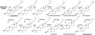 Skema jalur sintesis kolesterol