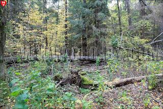 Леса Беларуси в районе деревни Цыгань