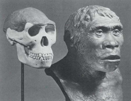 Contrast between the real Piltdown Man to a real Skull.