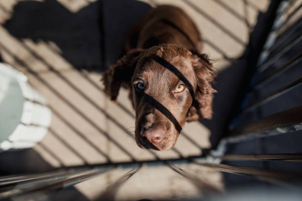 House Training Dogs – Dealing with Problems